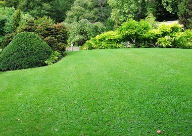 foto-ogrodnictwo-3